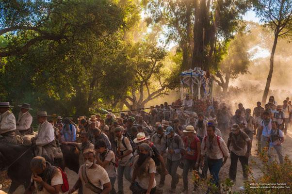 Una primavera mas la hermandad de Huelva camina hacía el Rocío  / A spring but the brotherhood of Huelva walks to the Rocio