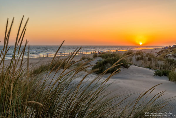 Playa de Doñana  /  Doñana beach