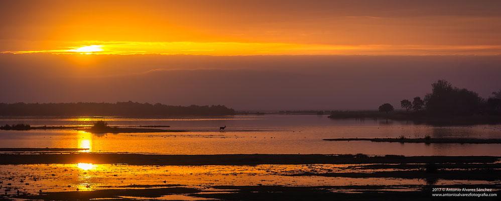Cruzando la marisma  /  Crossing the marsh