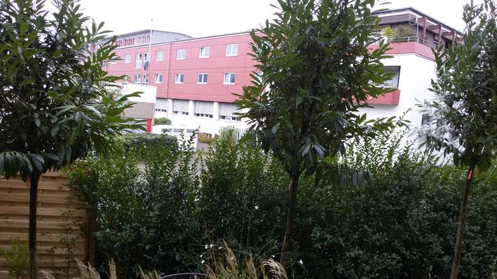 6 neue Bäumchen von der  Baumschule Rösch in Achern