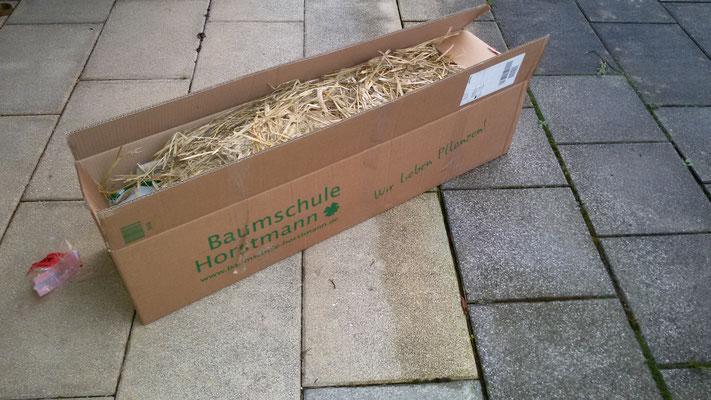 Bequem und günstig - Pflanzen liefern lassen