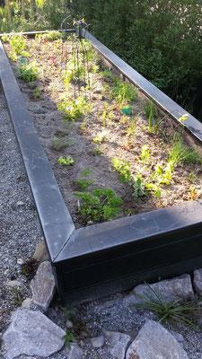 Endlich ein eigenes Gemüsebeet bepflanzen!
