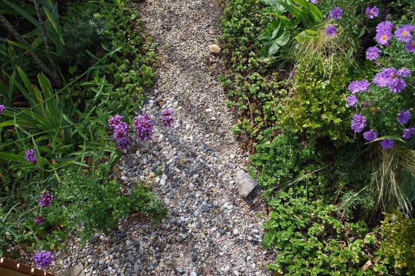 Kiesweg mit Sedum an den Seiten (Steinreihen sind überflüssig)