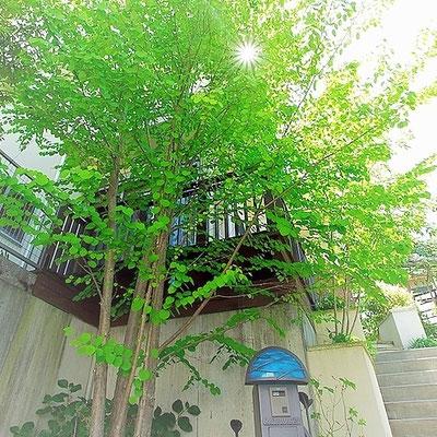 ミヤモリデザイン事務所:外構の施工例「緑につつまれた暮らし」