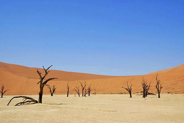 """""""Deadvlei"""" beim Sossusvlei. Die Bäume sind schon vor mehreren 100 Jahren abgestorben."""