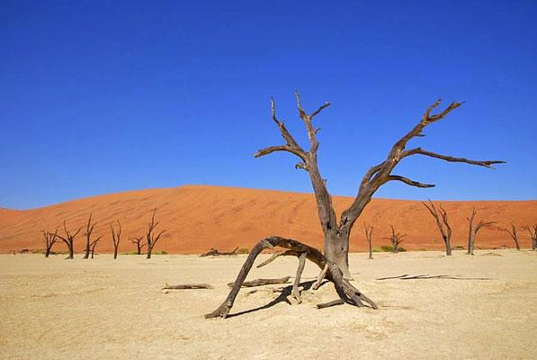 """""""Deadvlei"""", die Pfanne nahe Sossusvlei besteht aus Lehm und Ton und ist von Namibsand-Dünen umschlossen."""