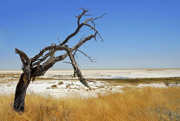 Die Etosha-Pfanne ist der Boden eines ehemaligen Sees im Norden Namibias und Teil des Etosha-Nationalparks.