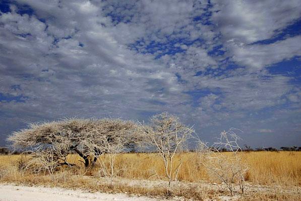 Ein letzter Blick in den Etoscher Nationalpark.