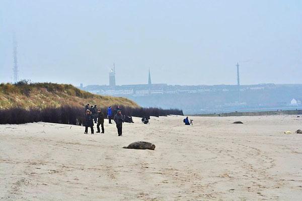 Naturfreunde und Fotografen am Nordstrand der Düne