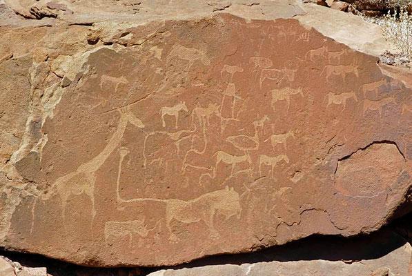 Felsgravuren von Twyfelfontain, bei den dargestellten Tiere scheinen es vor allem Giraffen, Antilopen, Zebras und auch Löwen zu sein, auch das inzwischen fast ausgerottete Breitmaulnashorn ist abgebildet.