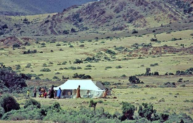 Nomaden, sie ziehen mit ihren Ziegen und Kamelen durch die Berge.