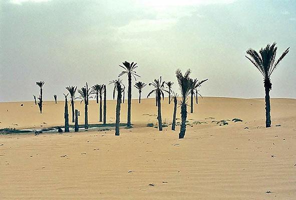 Wasserloch in der Arabischen Wüste bei Sues / Ägypten