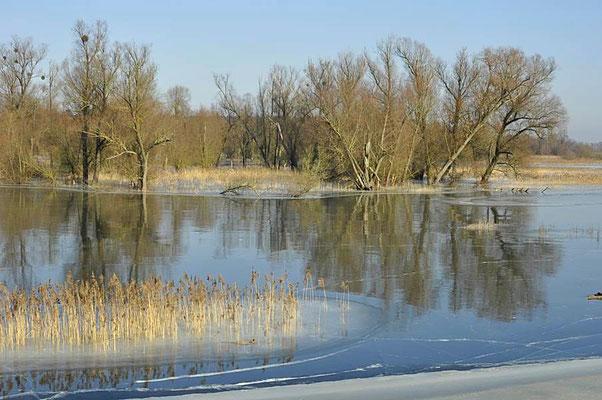 Winter im Nationalpark Unteres Odertal