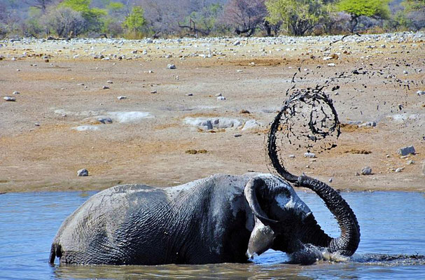 """Afrikanischer Elefantenbulle (Loxodonta africana)  beim baden. Bis zu 8 l Wasser passen bei einem """"Zug"""" in den Rüssel."""