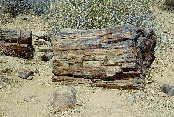 Beim Versteinerten Wald, die geologische Fundstätte befindet sich in der nordwestlichen Region Kunene etwa 30 km westlich der Gemeinde Khorixas.