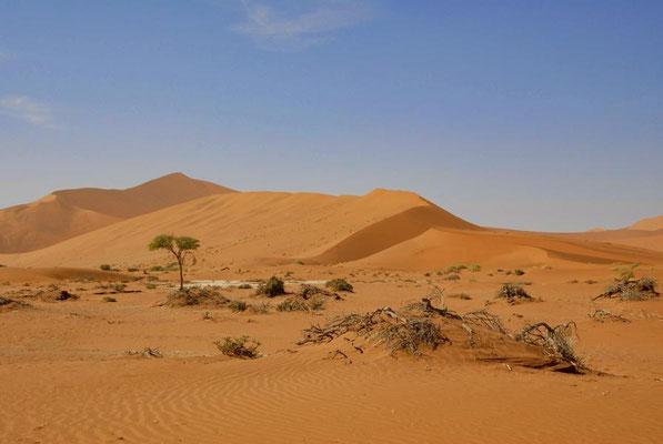 Die höchste Düne ist Big Daddy, die auch Crazy Dune genannt wird.
