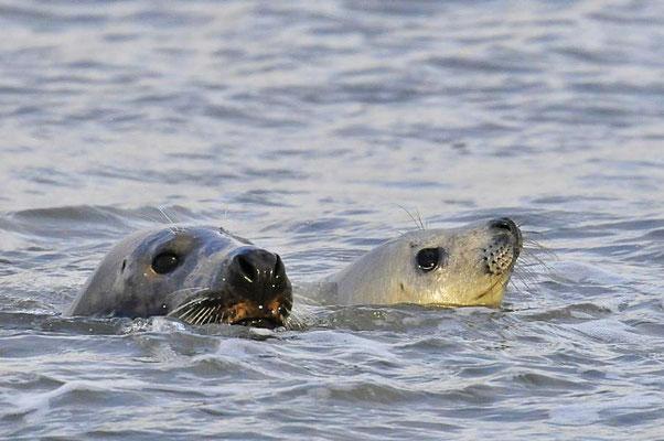 Mutter mit Jungtier - Beim Freischwimmen