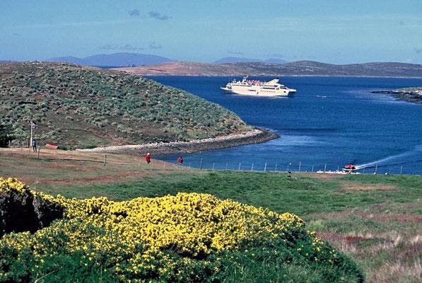 Die MS Vistamar liegt auf Reede vor West Point Island. Die Insel befindet sich am nordwestlichen Punkt von West Falkland.