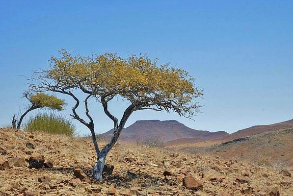 Das Damaraland ist weitestgehend mit dem Hauptsiedlungsgebiet der gleichnamigen Damara identisch.