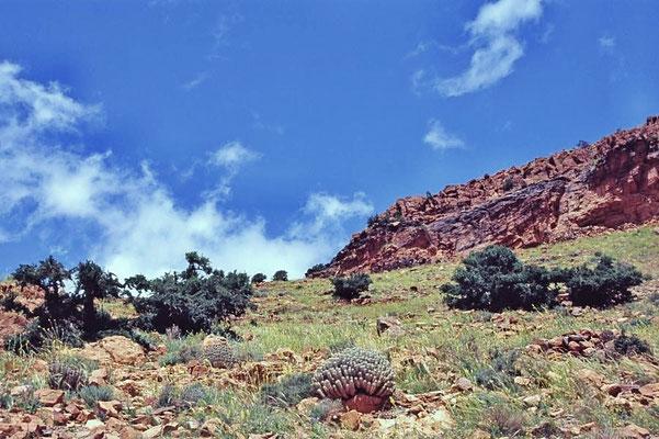 Westsahara  liegt in Nordafrika. Der Status der Region ist bis heute ungeklärt.