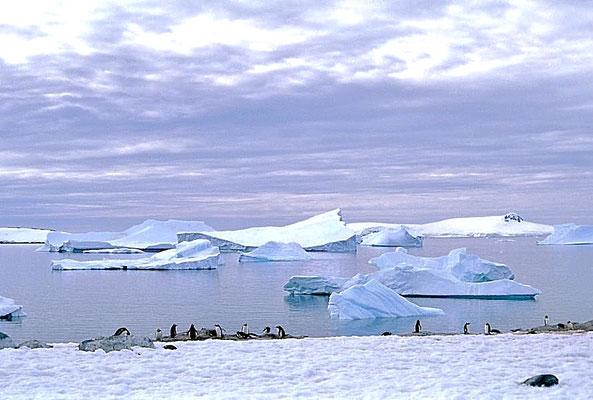 Blick von Cuverville Island auf treibende Eisberge.