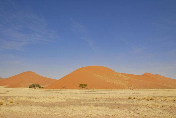 Die höchsten Sanddünen der Welt befinden sich im Namib Naukluft-Nationalpark.