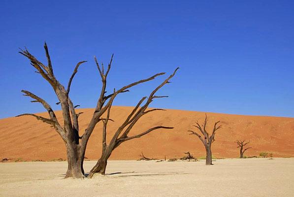 """""""Deadvlei"""" beim Sossusvlei, die orange Farbe des Sandes wird durch Eisenoxid hervorgerufen."""