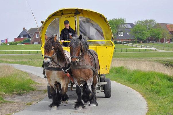 Öffentlicher Personennahverkehr auf der Hallig Hooge