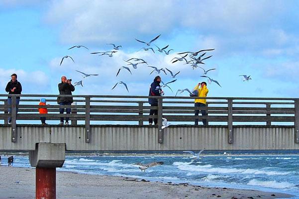 Möwenfütterung von der Seebrücke / Prerow
