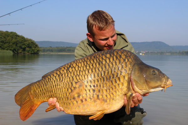 Andreas mit massivem Frankreich Bullen 19kg.