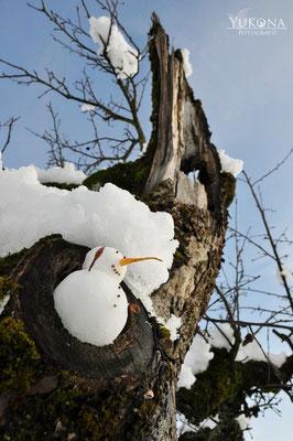 Schneemann auf dem Baum