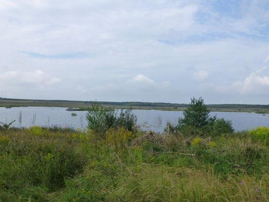Die gefluteten Löcher sollen einmal zur größten, zusammenhängenden Seenplatte Deutschlands werden.