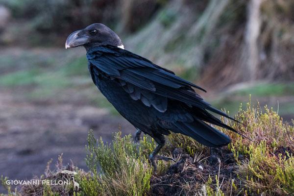 Bird at Second Cave  (3'450 m)