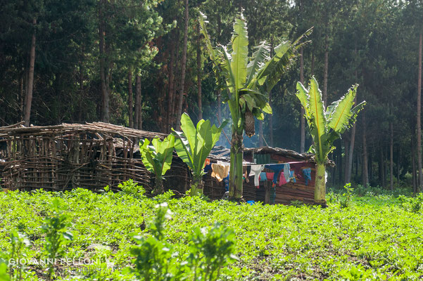 Near Nalemuru gate