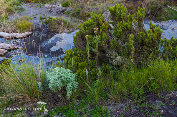 Near Mawenzi Tarn Hut (4'330 m)