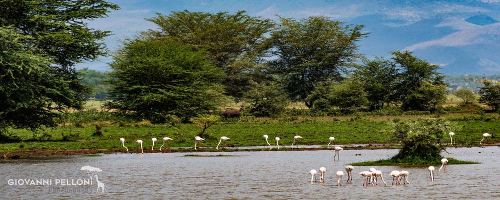 Birds at Lake Manyara
