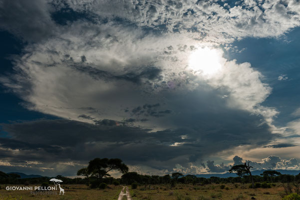 Dark clouds above serengeti