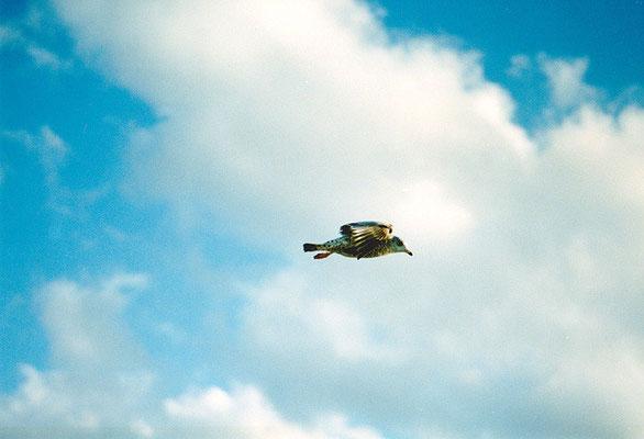まっすぐ飛べ/気流に乗る