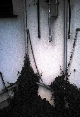 暗い日の配管と植物