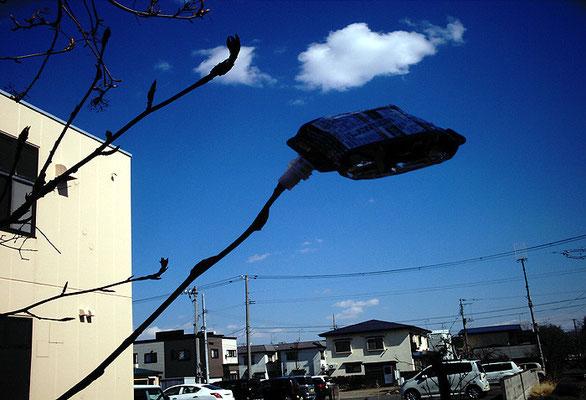 迷宮の町にて4/ウィダーインゼリーの木