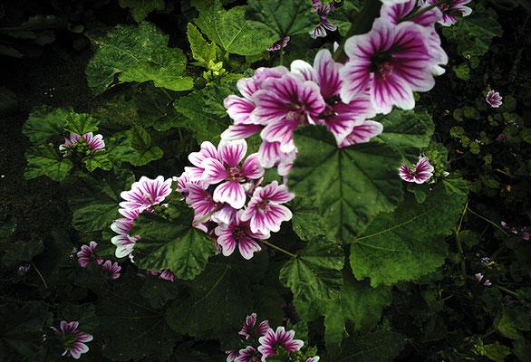 花を探す日曜日43