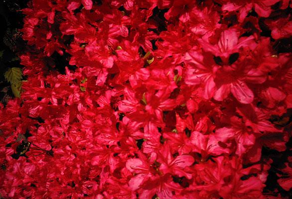 花を探す日曜日15