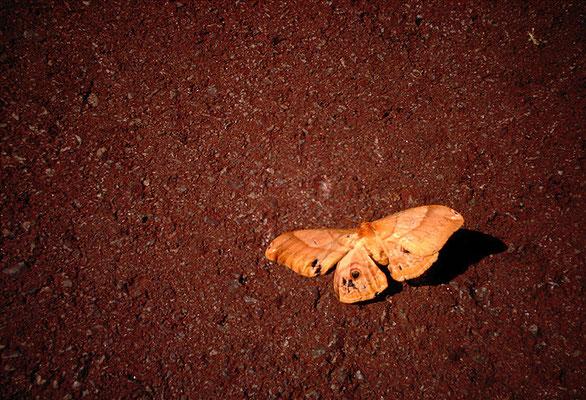 猛暑の中の蛾