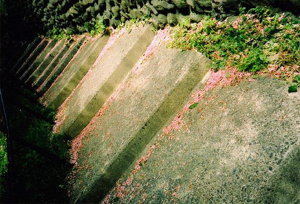 かつてとやがて11/桜の痕跡