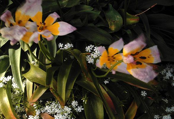 花を探す日曜日5