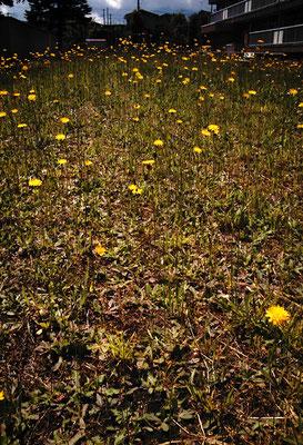 花を探す日曜日33