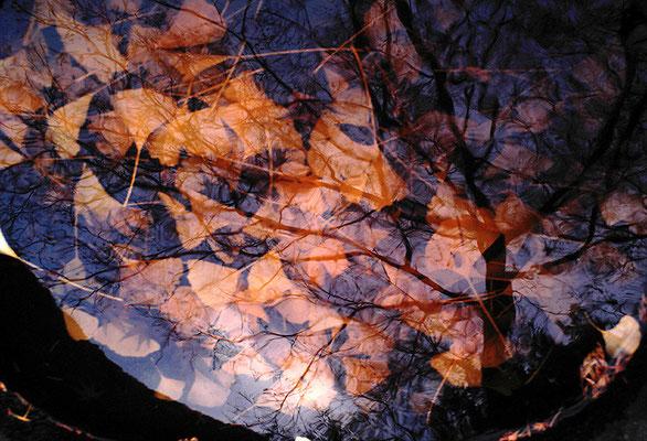 水に映る秋