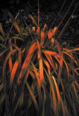 枯れ色/謎色の植物