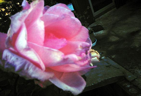 花の向こう側