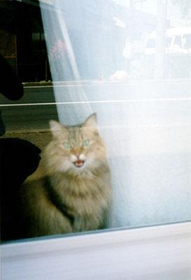 猫I/ドアの向こう